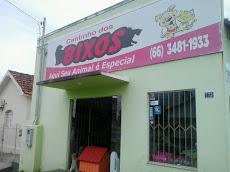 Foto relacionada com a empresa Cantinho dos Bixos