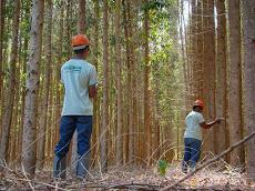 Foto relacionada com a empresa Clonar Resistência a Doenças Florestais