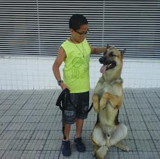 Foto relacionada com a empresa Adestramento de Cães Reis