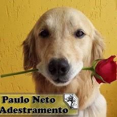 Foto relacionada com a empresa Paulo Neto Adestramento
