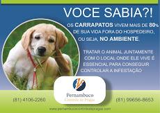 Foto relacionada com a empresa Pernambuco Controle de Pragas