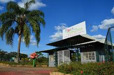 Foto relacionada com a empresa Rosas de Jardim