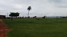 Foto relacionada com a empresa Fazenda Bom Sucesso