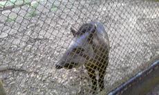 Foto relacionada com a empresa Parque Zoobotânico