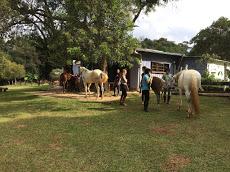 Foto relacionada com a empresa Paulo Neumann - Equus Constelação com Cavalos
