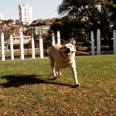Foto relacionada com a empresa AtletiCão Dog Walker e Adestramento Canino