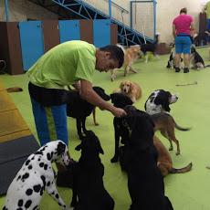Foto relacionada com a empresa Pet Days
